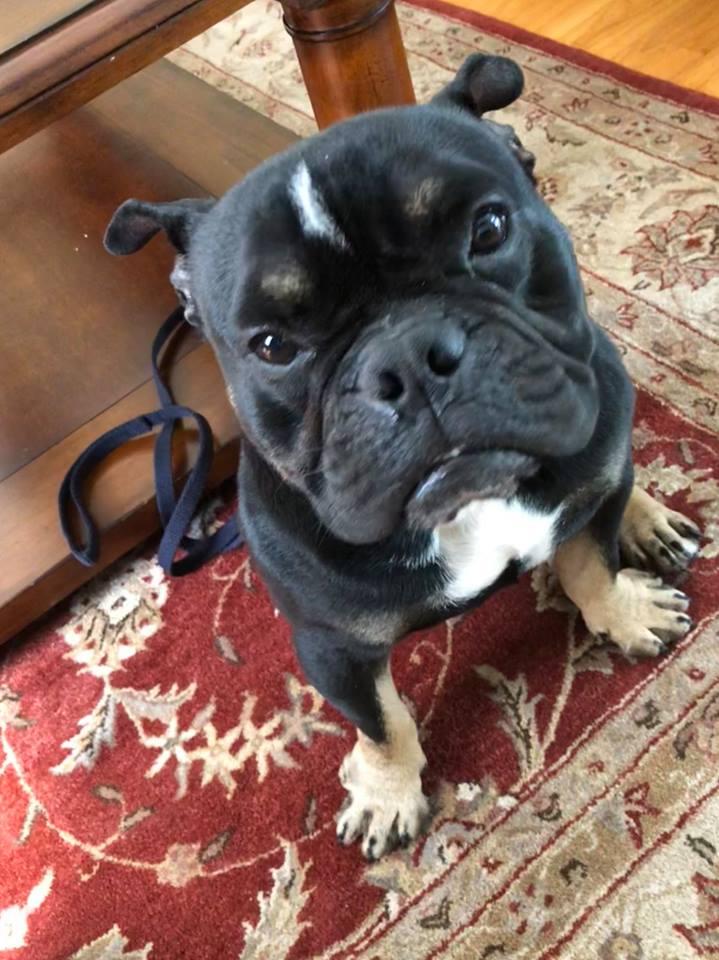 #rescuedogtraining, #dogtrainingSouthernConnecticut, #bestdogtrainers