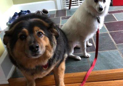 #siblingrivalry #puppytraining #richardhorowitz