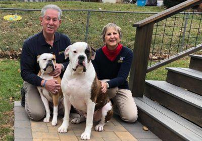 #bulldogtraining, #largedogtraining #barkbusterssouthernconnecticut