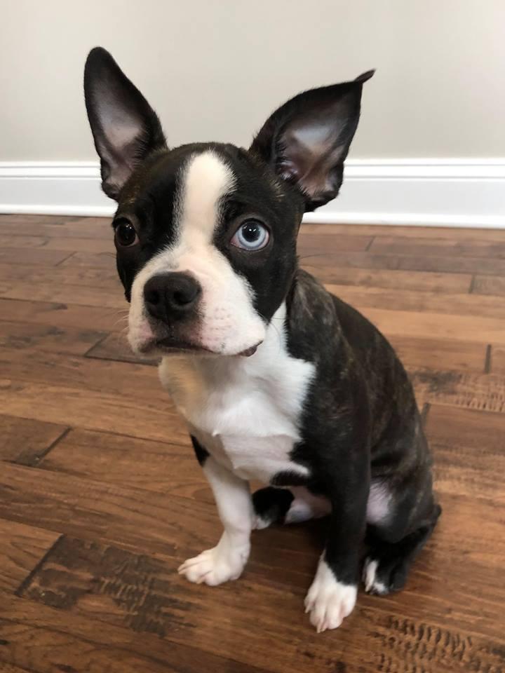 #puppytraining #barkbusterssouthernconnecticut