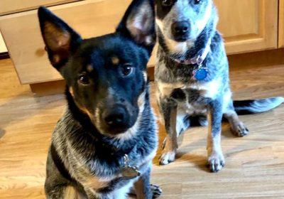 #dogsofbarkbusters #bestdogtrainingbarkbusters