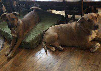 #siblingrivalry #bestdogtrainingnewhaven